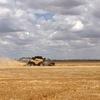 Soft Barley Straw  8x4x3 Heavy Bales