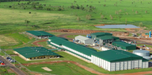 AACo's reports loss - New Beef Abattoir to be mothballed