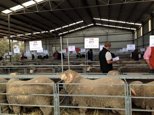Angenup Merino's and Poll Merino's overall average of $2769
