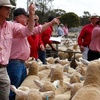Sheep sharply dearer at Bendigo