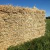 Barley/Vetch Hay