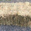 Clover & Rye Hay Small Bales x 2,500 All Shedded