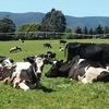 Fonterra and Bellamy join forces on Tasmanian organic milk