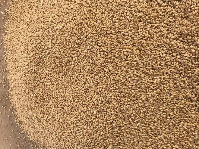 feed wheat sale