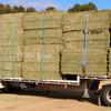 New Season Vetch Hay For Sale Ex or Del in 8x4x3's