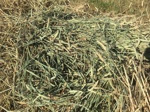 Wheaten & Rye 60/40% Hay 8x4x3 - 400 x 600 KG Approx Bales