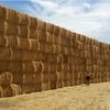 Barley Straw 8x4x3  952 x 570 KG Approx Bales.