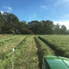 Clover Hay ( Balansa & Antas 50/50% ) 8x4x3 1000 x 600 KG Approx Bales $160.00+gst Hay Stacked Outside