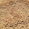 Feed Oats x 130 m/t Approx
