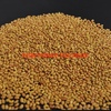 Aurora Lucerne Seed For Sale