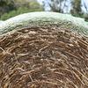 Oaten Hay / Cereal hay