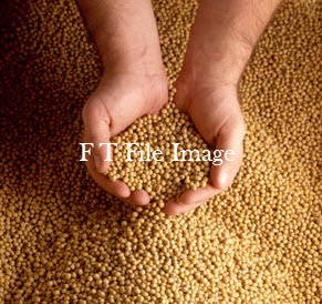 6mt Soybean Seed For Sale Graded