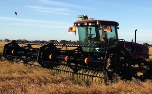 Windrowing Mowing