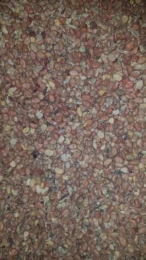 Grain seconds/ Sweepings/Tailings