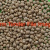 Lupins For Sale Ex Farm or Delivered 50mt