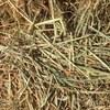 Wheaten Hay .