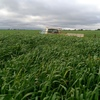 1000 Acres  Good Cropping Country Suitable For Grain Hay Or Livestock Production ( Lease ) Expression Of Interest