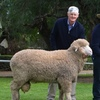 Borambil Merinos top average of $3252