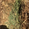 Good Vetch Hay For Sale