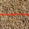 Quality Hay Variety Oat Seed Cleaned
