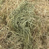 Rye and Lucerne Hay For Sale in 8x4x3's which is about 10% lucerne