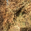 50mt of Vetch Hay For Sale in 8x4x3's