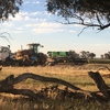 Contract Windrowing Work Wanted