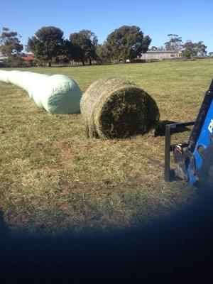 fresh round bales of silage for sale