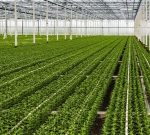 Horticulture - Production value set to grow 18 percent in the next 2 years
