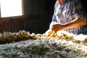 Wool market ends the week up