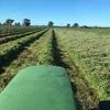 Balansa Clover Seed 99.9% purity 92%germ 32%hard seed