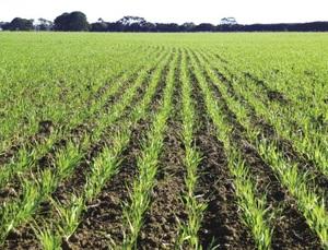 Grain Report - Drought hampering Black Sea planting campaign…