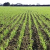 Grain Report - Drought hampering Black Sea planting campaign…