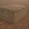 Vetch Hay 8x4x3  800 x 625 KG Approx Bales