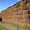 Single Load (42 Bales) of 20.8P/10.6ME Vetch Hay