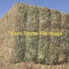 WANTED Vetch Hay 8x4x3