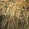 Barley & Rye Hay Rolls For Sale  400Kgs