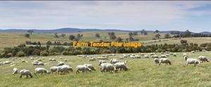 Agistment for Merino Ewes  May/June Lambing