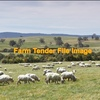Agistment for Merino Ewes  May/June Lambing