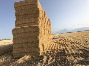 Barley Straw 8x4x3 Bales 530+ Kg's