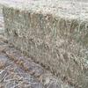 Oaten Hay 8x4x3 - 1,800 x 550 KG Approx Bales  # New Season #