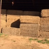 250 x Bales of Pea Hay Ave Weights 600kgs in 8x4x3 Shedded