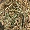 Wheaten Hay Rolls- 7.9 % P.   450 KG Ave.