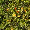 Fully Integrated Organic Dried Vine Fruit & Citrus Business For Sale