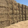 Sorghum Hay For Sale