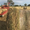 Pure Sub Clover Hay in 5x4 Rolls