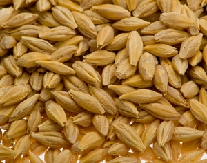 How much barley can Australia push into the Middle East?