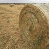 300 x Oaten Hay 420kg approx. 5x4 rolls