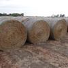 Clover / Rye Hay 5 x 4 rolls