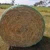 Barley & Lucerne Rolls 80% x 20% - 300 x 400 KG Approx  Round Rolls.
